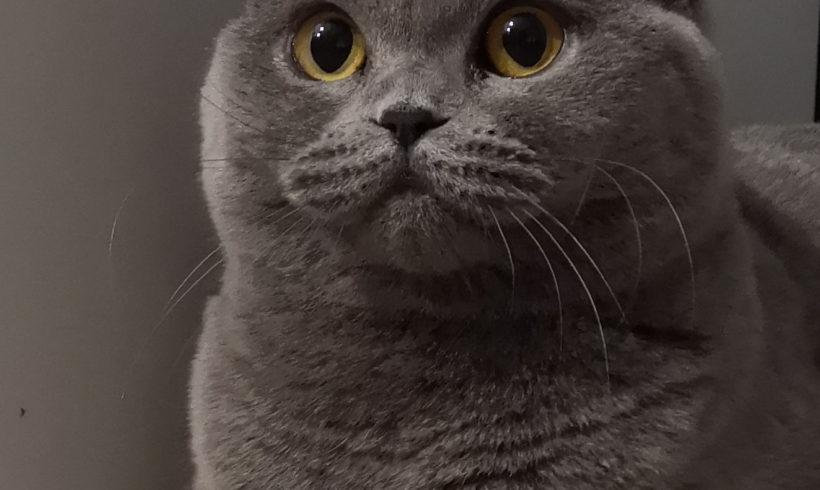 Isma Kosmyk Kotów *Pl