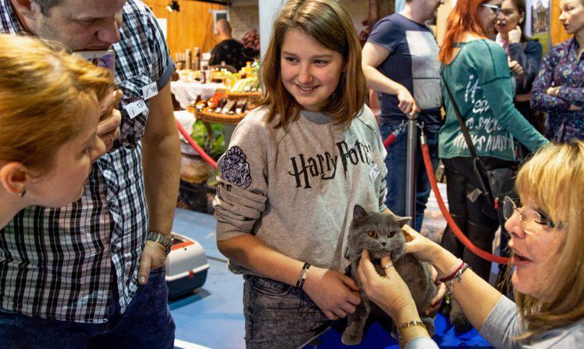 LVI i LVII Międzynarodowa wystawa kotów w Warszawie