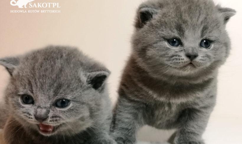 14 lutego 2019 na świat przyszły walentynkowe kociaki