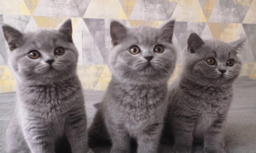 Nowe kocięta w hodowli